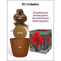 Red Lion Amaryllis Flower Giftbox Kit $  5 (Save 75%)