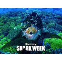 Discovery Channel: Shark Week: Season 2019 (Digital HD) $2