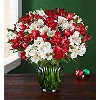 Christmas Flowers - Double Bouquet plus Vase - $33 to $35 with Free Shipping and No Service Fees