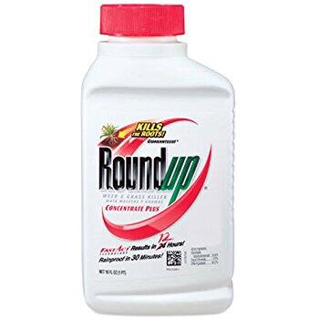 Roundup Weed and Grass Killer Concentrate Plus, 16-Ounce $5 w/ 5% S&S or $4.75 w/ 15% S&S @ amazon