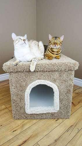 Premier Litter Box Enclosure $73.99 and Many Cat Trees On Sale As Well