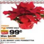Live Poinsettia Plants $0.99 In store only: Friday 11/24 Home Depot