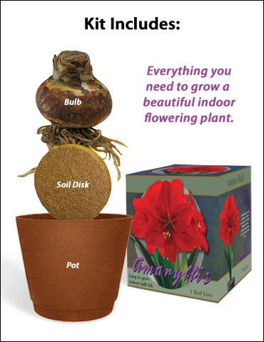 Red Lion Amaryllis Flower Giftbox Kit $5 (Save 75%)