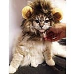 Pet Halloween Costume - Lion Mane Wig for small dogs & cats $9.96 shipped Amazon FSSS or Prime