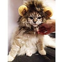 Amazon Deal: Pet Halloween Costume - Lion Mane Wig by Dogloveit for small dogs & cats $9.96 shipped Amazon FSSS or Prime