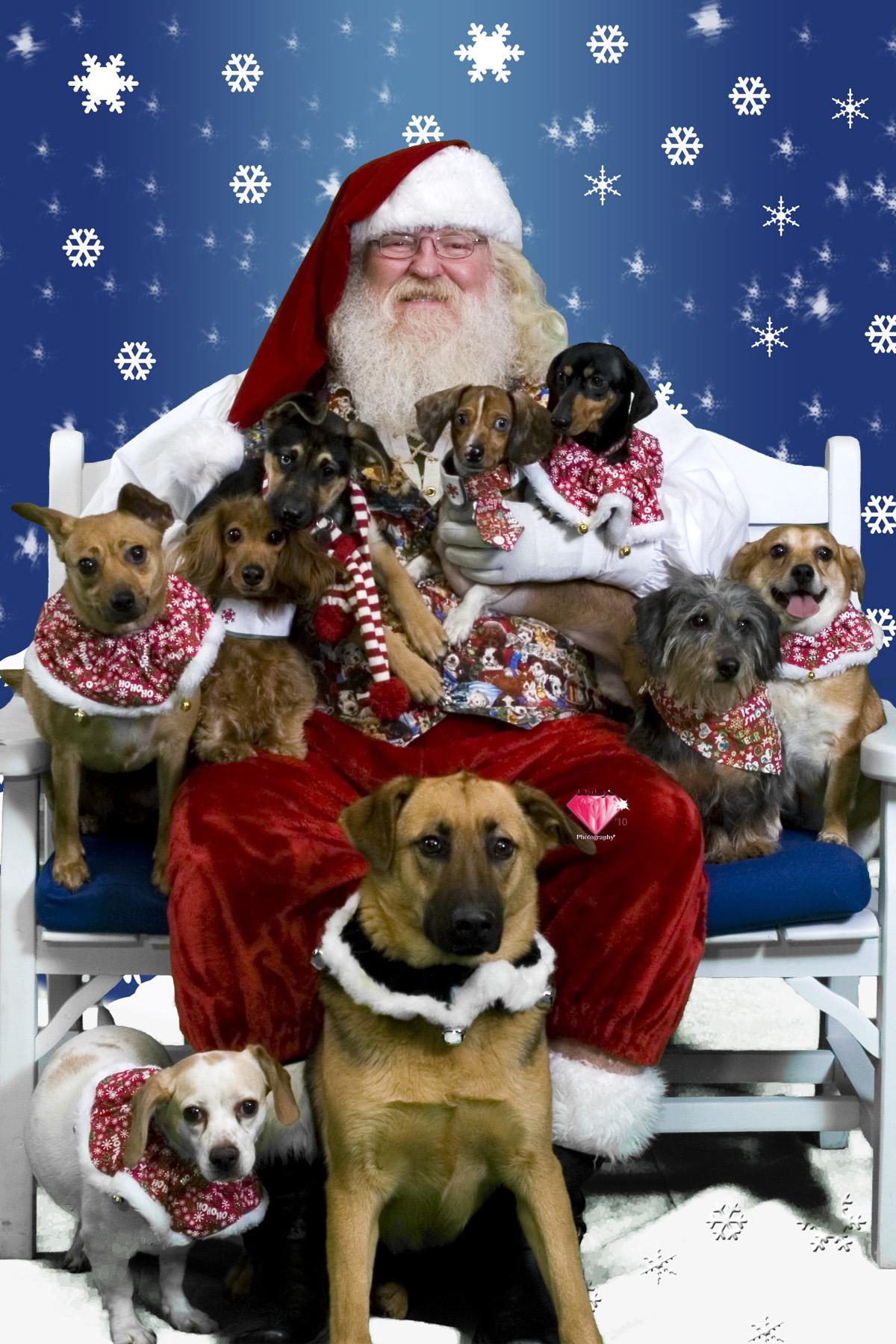 Petsmart Christmas Eve Hours.Free Photos With Santa Petsmart Slickdeals Net