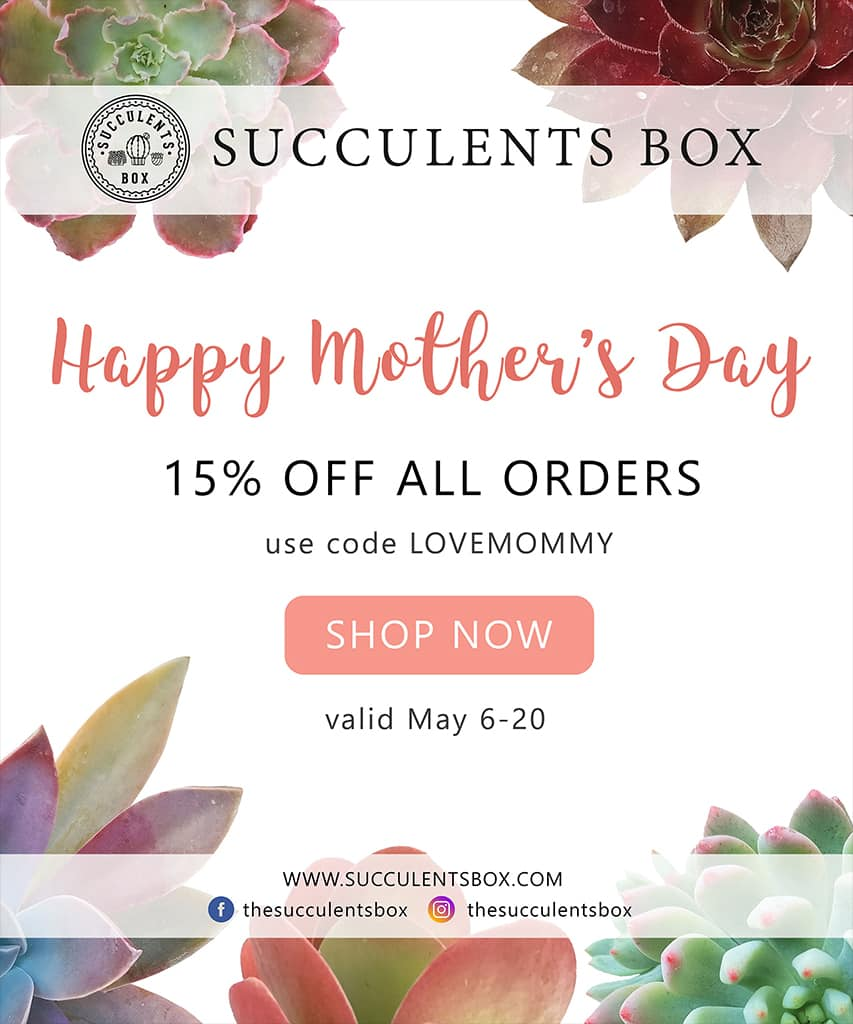 Succulents Box - 15% off all orders $5.45