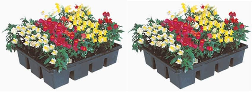 12-Pack Annuals are 2 for $10 at Home Depot B&M (regular 1 for $9.98) *Today Only*