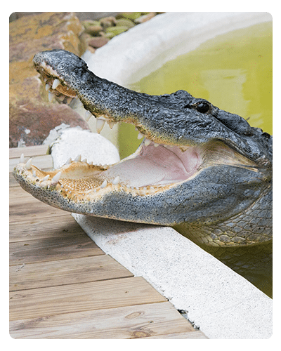 [Florida] Free Gator Park Admission with Canned Food Donation - Month of October 2020