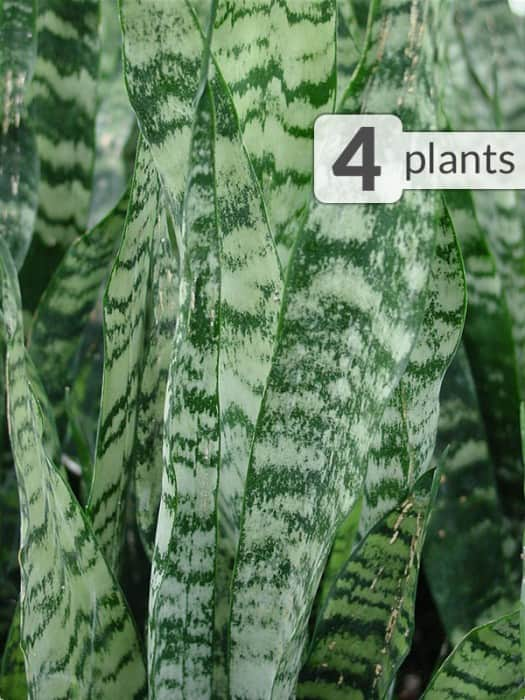 Plants: Kens Nursery - Up to 70% off select plants