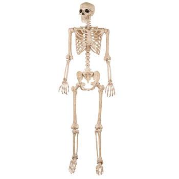 Full Size Skeleton $35 at Costco