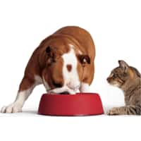 Target: Select Pet Care and Pet Food