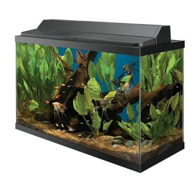 Petco 29 Gallon Aquarium Deluxe Kit 69 99 120off Slickdeals Net