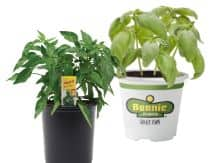 Plants and Vegetable plants for sale on 1.78 - In store only (Today only) $1.78