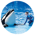 SeaWorld San Diego Gold Annual Pass eticket $95 ( includes 3 free guest passes and (2)$15 guest passes on select dates)