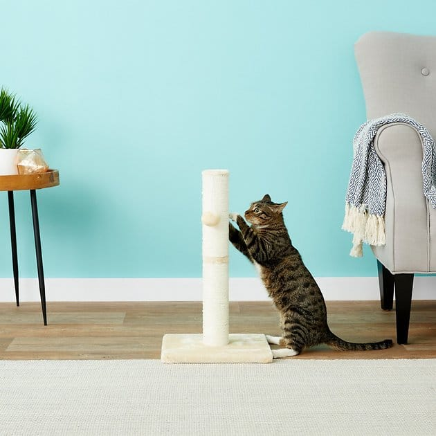 """21"""" Frisco Cat Scratching Post with Toy $10.79 + Free Shipping over $49"""