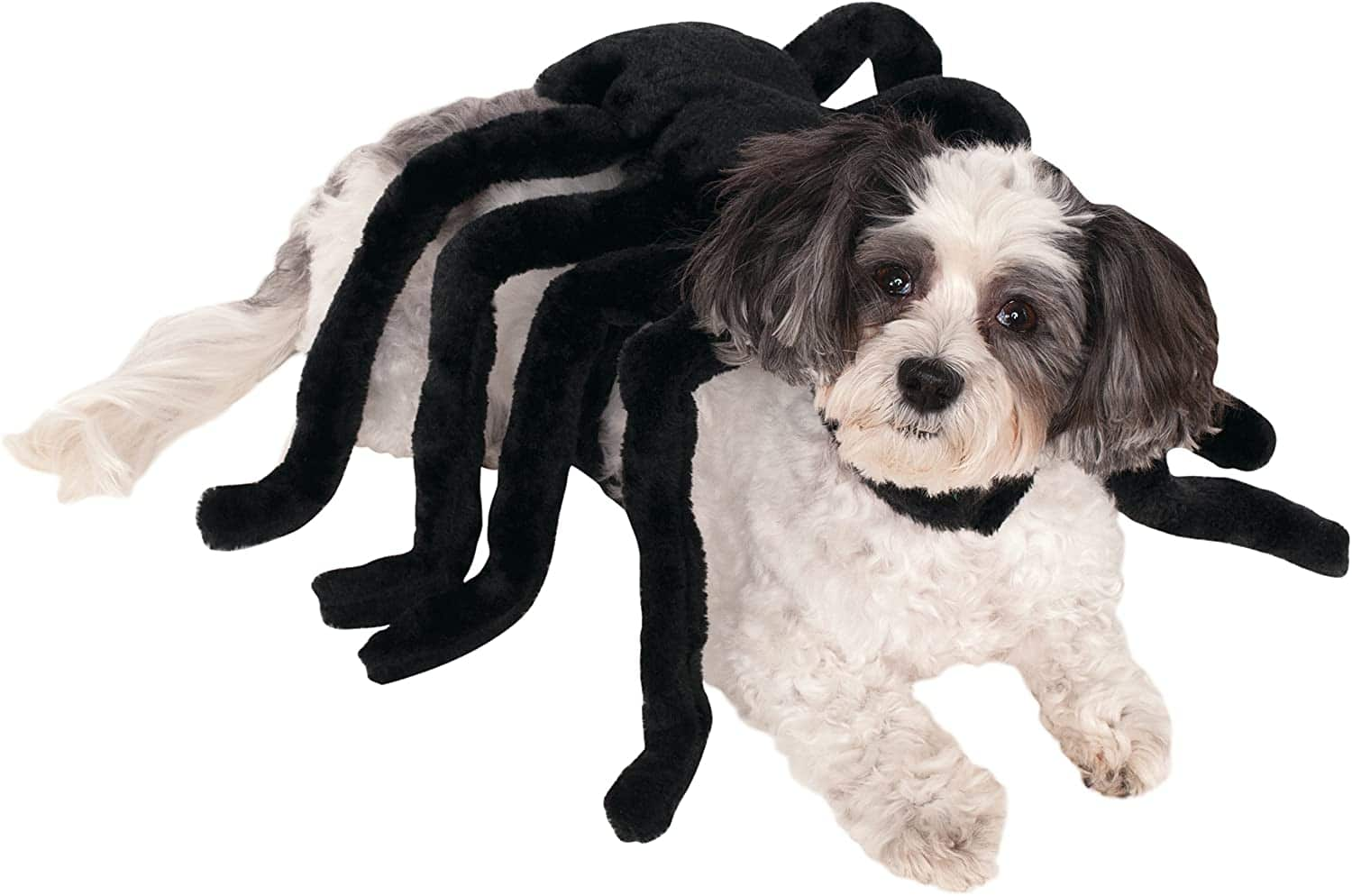 Rubie's  Pet Spider Harness Costume (Medium) $5.49 + Free Shipping w/ Prime or on $25+