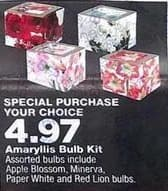True Value Black Friday: Assorted Amaryllis Bulb Kit for $4.97
