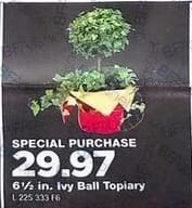 True Value Black Friday: 6.5-in Ivy Ball Topiary for $29.97