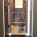 Carlson Extra Tall Metal Expandable Pet Gate $13.78 @ Amazon & Walmart