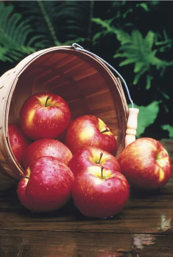 3.5 gal Fruit Trees 50% off at lowes in store only - YMMV $16.49