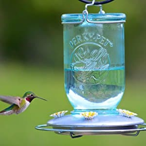 Perky-Pet 785 Mason Jar Hummingbird Feeder (Blue color) with reduced price $3.54 (82% off) @amazon as add-on item
