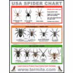USA Spider Identification Chart