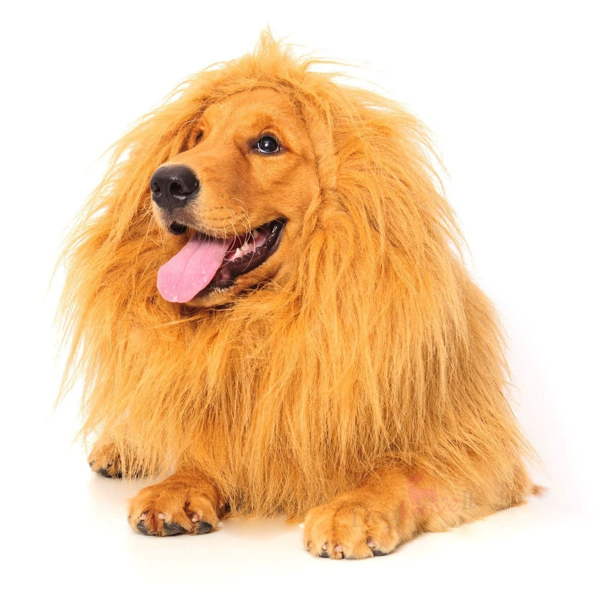 Dogloveit Dog Costume - Lion Mane/Lion Wig for Dog with Gift (Lion Tail) $6.99