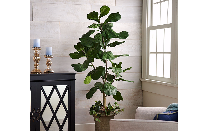 5' Potted Fig Plant $56 + $5.50 Shipping @ QVC $61.5