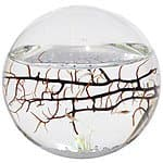 EcoSphere Closed Aquatic Ecosystem, Sphere $38 Amazon