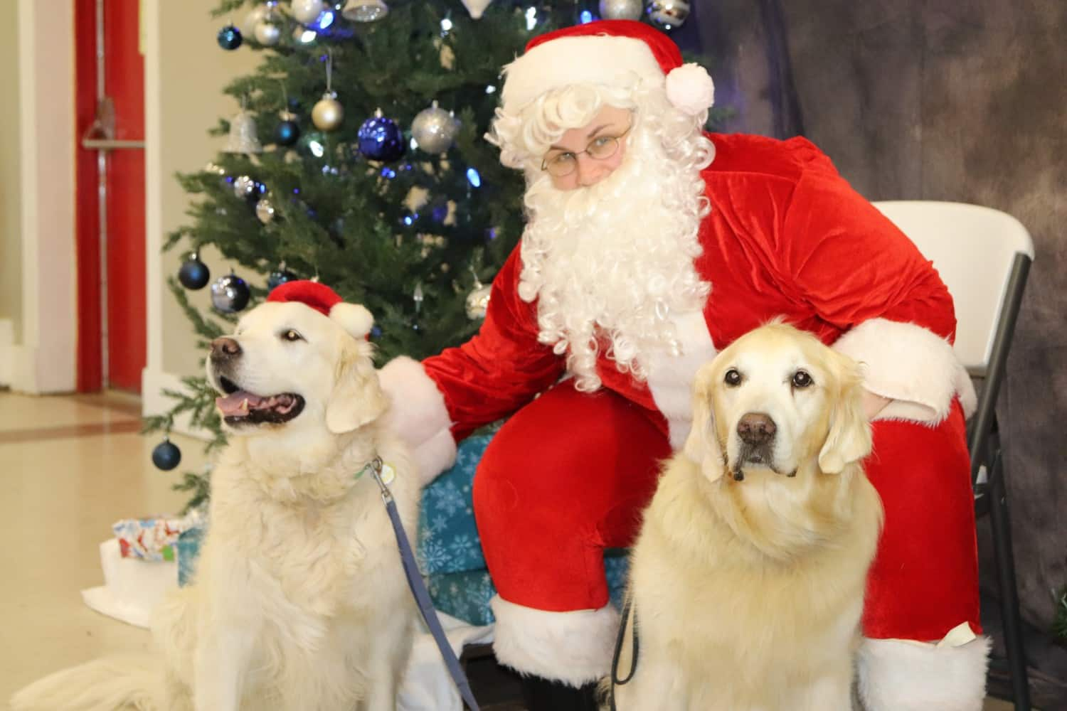PetSmart Is Giving Away Free Photos Of Your Pet With Santa This Weekend (Dec 16-17)