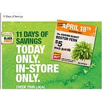 "Home Depot Deal: Home Depot has the Boston Fern 10"" pots for 5.00 each (limit 10) today only - April 18th"