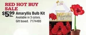 Ace Hardware Black Friday: Amaryllis Bulb Kit for $5.99