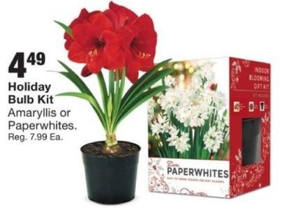 Fred Meyer Black Friday: Holiday Bulb Kit for $4.99