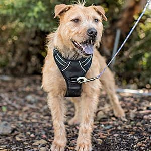 Dog Harness-Front Range No-Pull Harness with 3M Reflective Oxford Material from $11.87 to $13.49 (All Sizes Available)