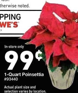 Lowe's Black Friday: Poinsettia, 1 qt, In store Only for $0.99