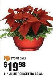 "Home Depot Black Friday: 11"" Julie Poinsettia Bowl for $19.98"