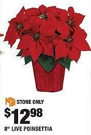 "Home Depot Black Friday: 8"" Live Poinsettia for $12.98"