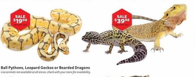 Pet Supplies Plus Black Friday: Ball Pythons w/ Card for $19.98