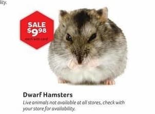 Pet Supplies Plus Black Friday: Dwarf Hamsters w/ Card for $9.98