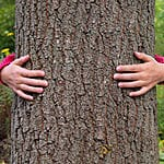 tree_hugger's Avatar