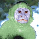 greenmky's Avatar