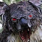 KoalaCookie's Avatar